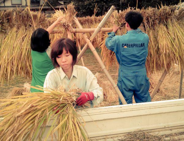 Staff et invités participent aux travaux des champs (photo : Clara Onuki).